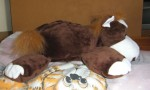 Soft brown horse plushie