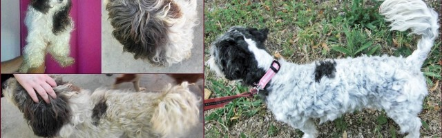 Health Recognition, An Award, A Dog